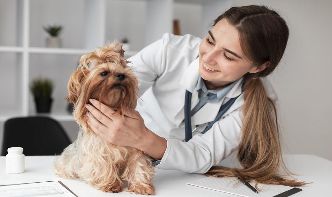 Como cuidar a las mascotas